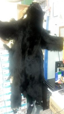 bear-hide-2
